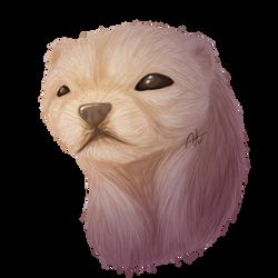 Ferret Face