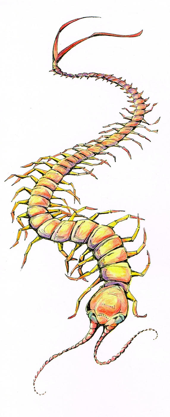 Centipede by Duckweed