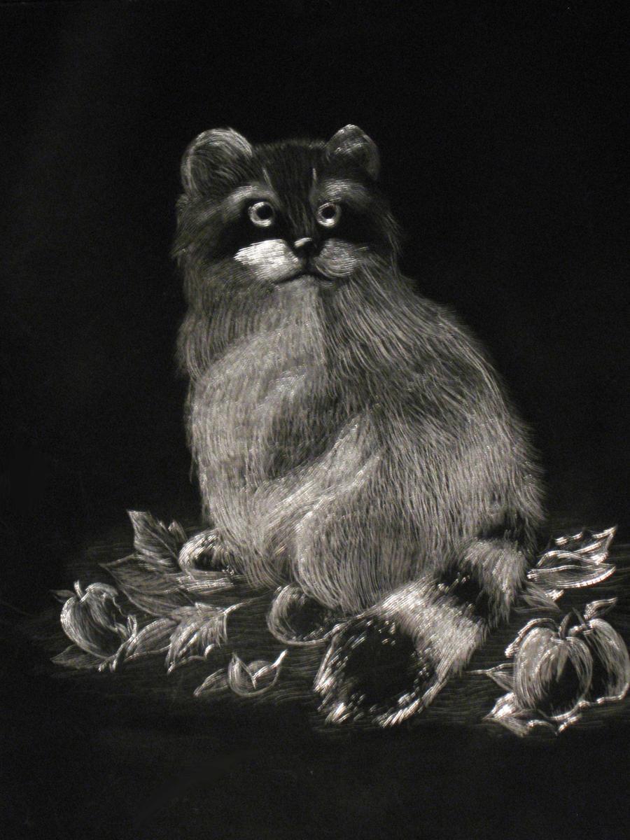 Raccoon Scratch Art By SamuraiWARRIOR7