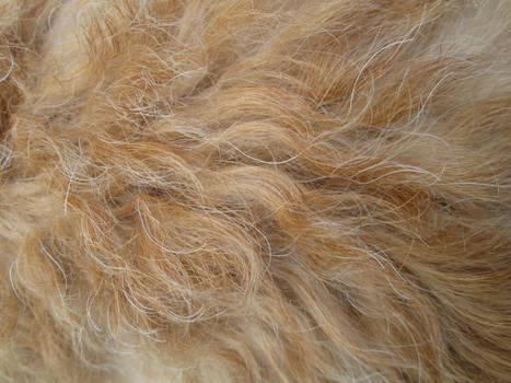 Fur Texture 2