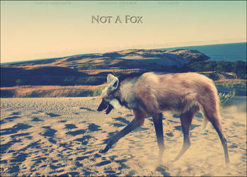 Not A Fox by tintoin
