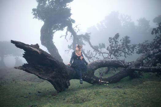 Forest Phantom I