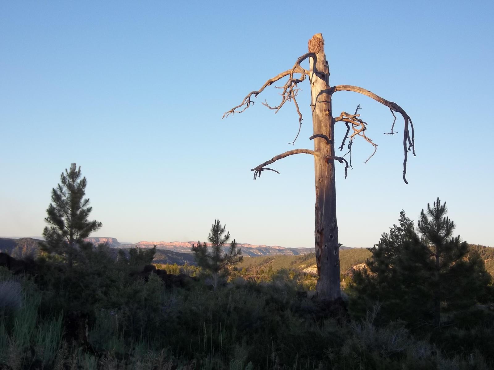 Scragled Tree by GwillaTheDragon