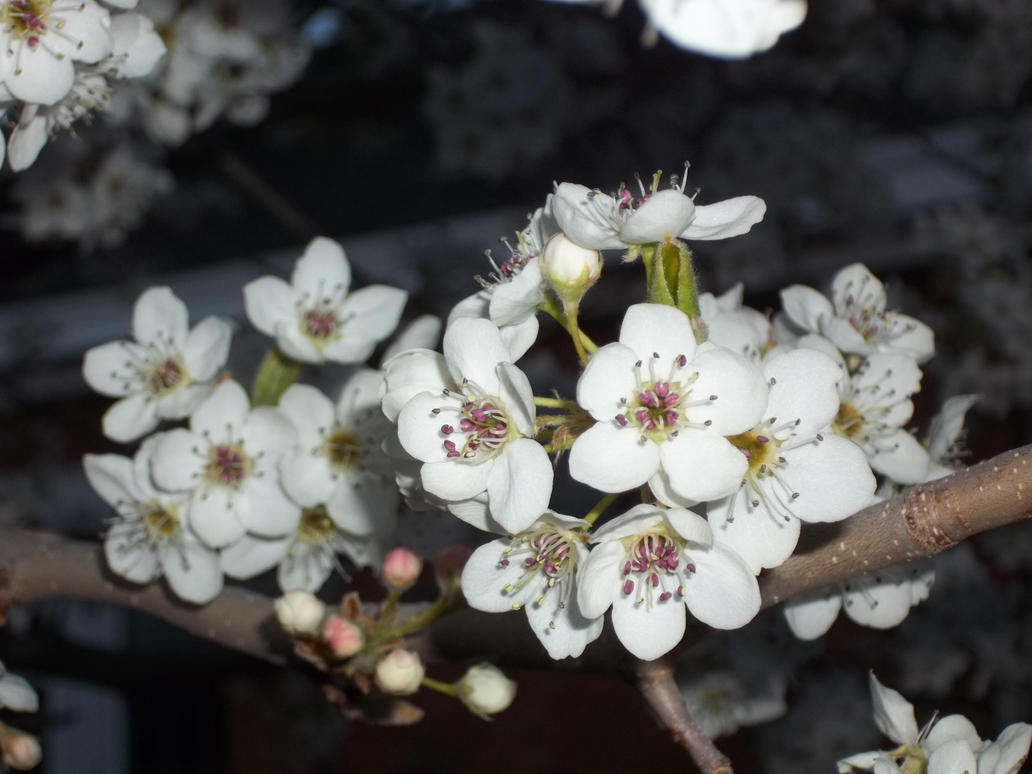 Spring by GwillaTheDragon