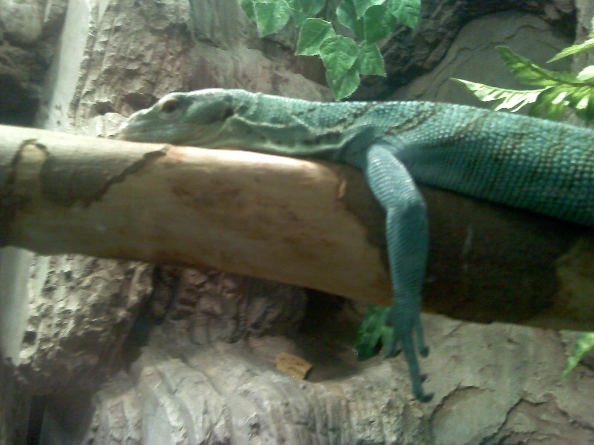 Lazy Lizard by GwillaTheDragon