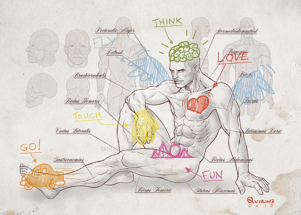 Anatomy by Decalnero