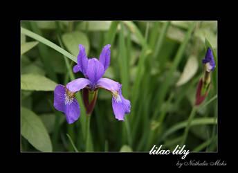 lilac lily by dieZera