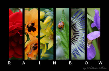 rainbow by dieZera