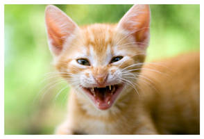 Kitty's Funny Face by ivanlee
