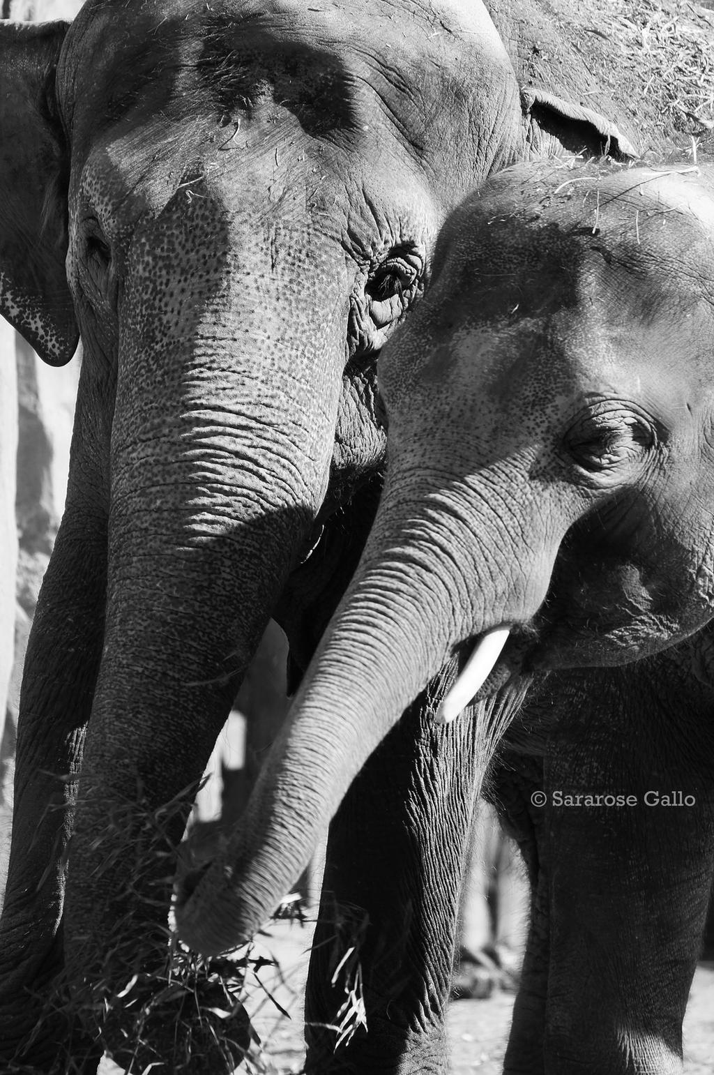 Elephant Love by ScooterTheDog