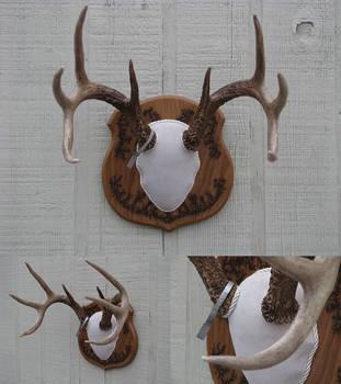 Antler Mount 7 - Wisconsin Whitetail by DiamondDustTaxidermy