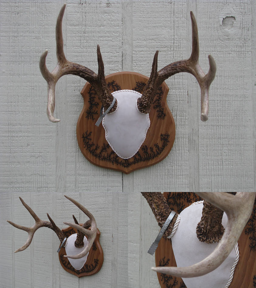 Antler Mount 7 - Wisconsin Whitetail