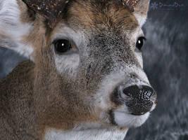 Allan's Buck Close Up