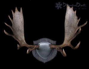 Alaskan Moose Antler Mount in Grey