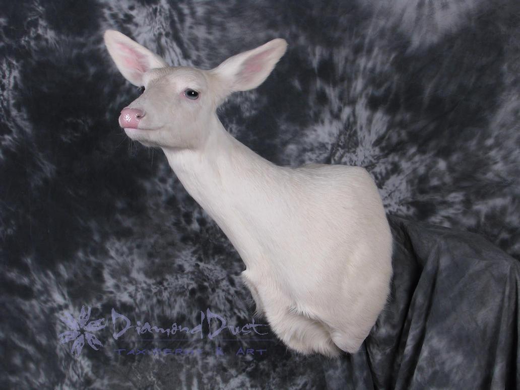 Albino Whitetail Doe by DiamondDustTaxidermy