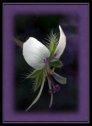 Peppermint flower by DominoNoel