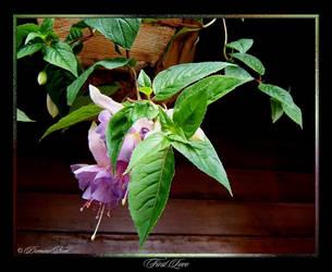 Fuchsia_First Love by DominoNoel