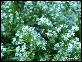 Ittle Bitty Beetle by PunxAngel
