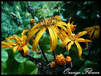 Orange Flower by PunxAngel