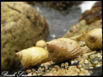 Sea Snails by PunxAngel