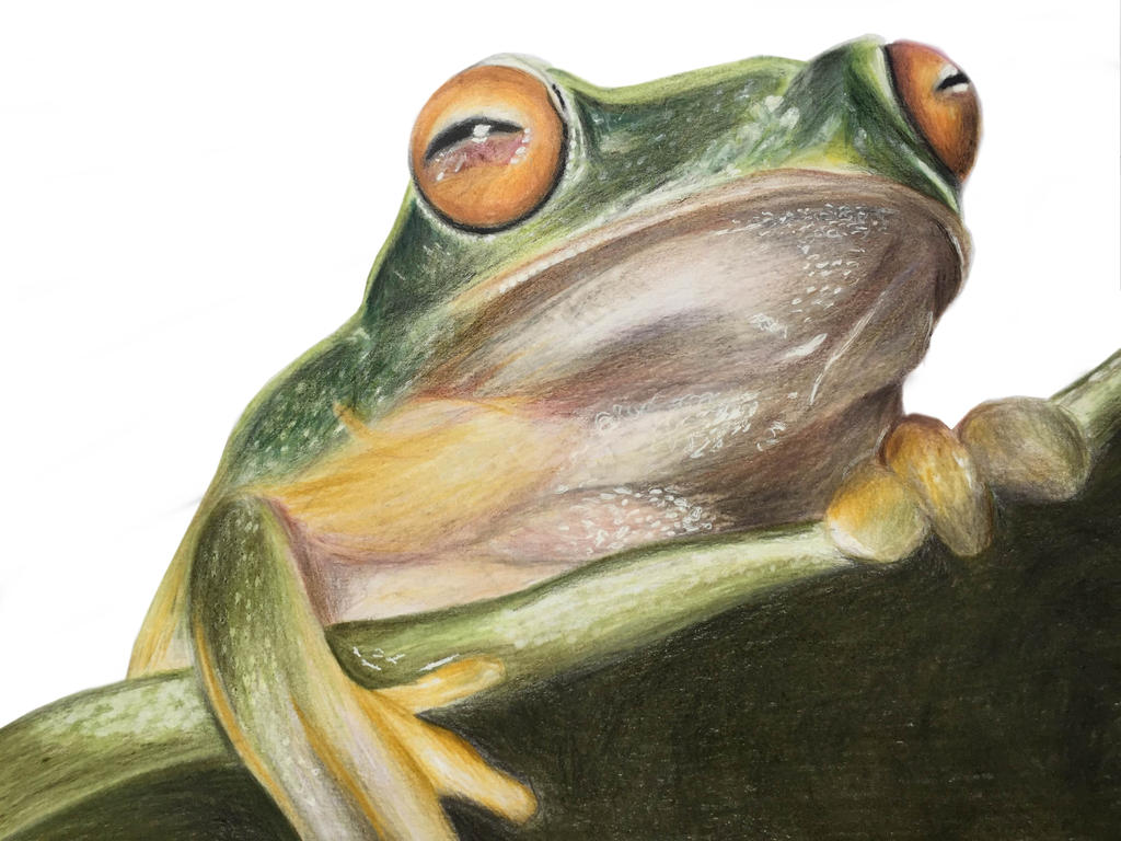 Frog by Nessie162