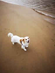 My dog by garrus368