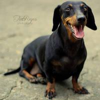100208 dog portrait by tintininin