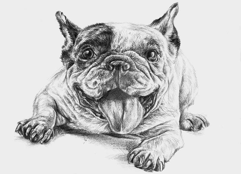 French bulldog 3 by kamilafranke