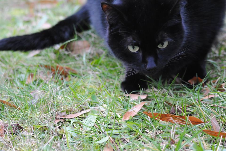 Lotek Portrait Outside by KelseyMariePhoto