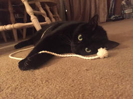 Kitty and his String