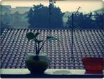 A Flower And A Jar by bleedangel