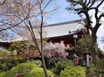 Ueno Shrine by mackymole