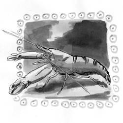 Snapping Shrimp - Inktober2018 Day 27: Thunder