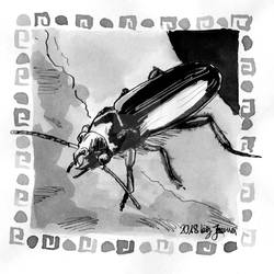 Stenopholus Beetle - Inktober2018 Day 31: Slice