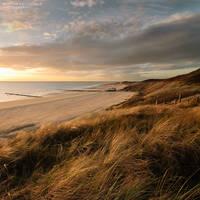 Dunes in November Light