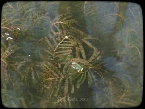 aquatic by majesticnocturne
