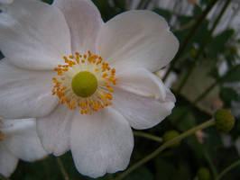 Plant - White Flower
