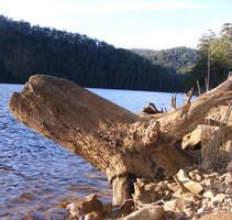 Dead Tree Fallen Across Water by Gracies-Stock