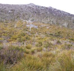 Grassy Mountain-Hill