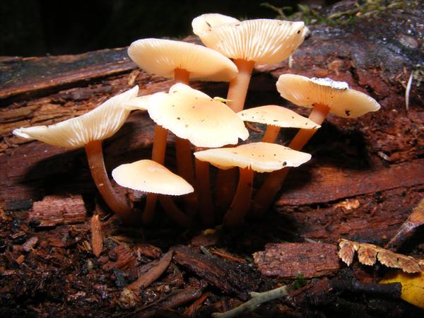Tiny Mushroom - Fairy Seat 07