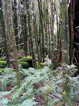 Liffey Falls 04 - Rainforest