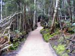 Pathway Through Woods 01