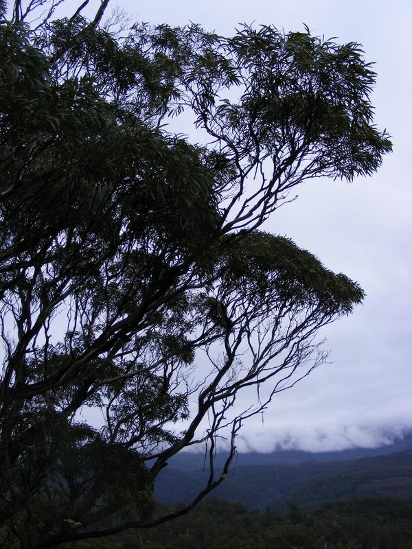 Tree 02 by Gracies-Stock