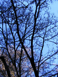 Tree 08 by Gracies-Stock