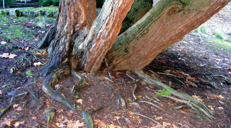 Tree 10 by Gracies-Stock