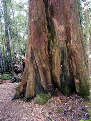 Tree 15 by Gracies-Stock