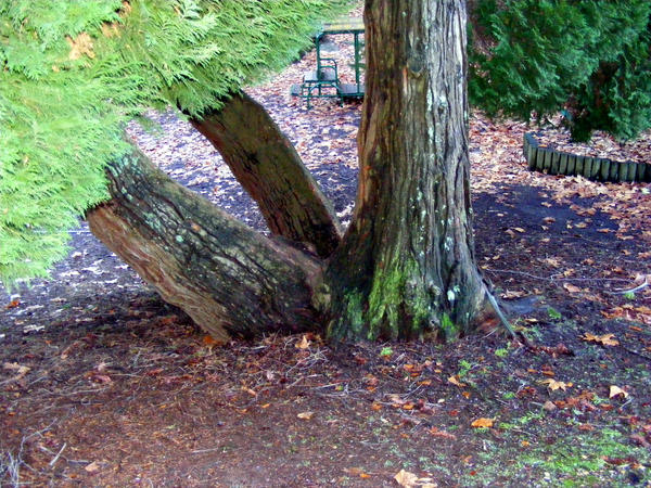 Tree 18 by Gracies-Stock