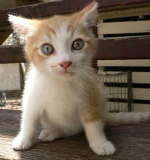 Kitten Stock - Looking Scared