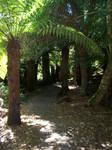 Liffey Falls - Rainforest 1