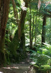 Liffey Falls - Rainforest 6